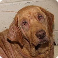 Adopt A Pet :: Gracie - Marietta, OH