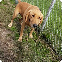 Adopt A Pet :: Titan - Portland, IN