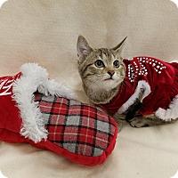 Adopt A Pet :: Precious - Northfield, OH