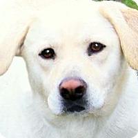 Adopt A Pet :: DAISY(SMART-LOVING-GORGEOUS! - Wakefield, RI