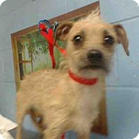 Adopt A Pet :: URGENT on 3/3 SAN BERNARDINO - San Bernardino, CA
