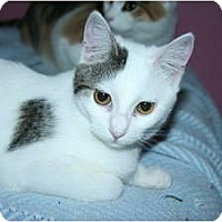 Adopt A Pet :: Astrid - Santa Rosa, CA
