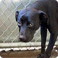 Adopt A Pet :: JOSEPH - Raleigh, NC
