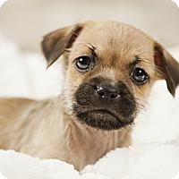 Adopt A Pet :: Milo - Wytheville, VA