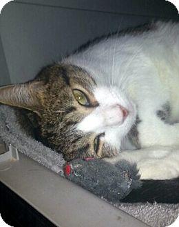 Gilbert Arizona Cat Rescue