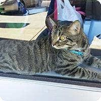 Adopt A Pet :: Pugsley - McDonough, GA