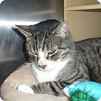 Adopt A Pet :: Tommie - Colmar, PA