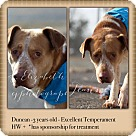 Adopt A Pet :: Duncan *Foster Needed*
