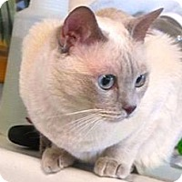 Adopt A Pet :: Lavender - Davis, CA