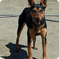 Adopt A Pet :: Minnie - Winters, CA