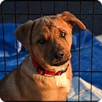 Adopt A Pet :: Little Lou - Westminster, MD
