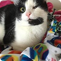 Adopt A Pet :: Wink - Toledo, OH