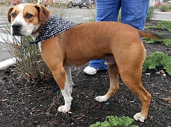 American Bulldog Mix Dog for adoption in White Bluff, Tennessee - Elvis/jackie