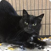 Adopt A Pet :: Marti - Medina, OH