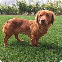 Adopt A Pet :: Slinky - Los Angeles, CA