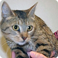Adopt A Pet :: Lori - Wildomar, CA