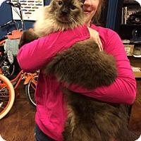 Adopt A Pet :: Emperor Woo - Glendale, AZ