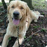 Adopt A Pet :: Sammy M - Capon Bridge, WV