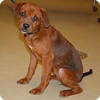 Adopt A Pet :: Honey - Willingboro, NJ