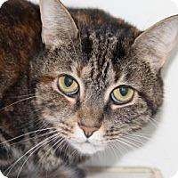 Domestic Shorthair Cat for adoption in Greensboro, North Carolina - Lilly