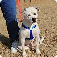 Adopt A Pet :: Paisley - Nesbit, MS