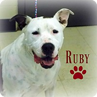 Pit Bull Terrier Mix Dog for adoption in Defiance, Ohio - Ruby