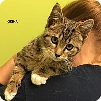Adopt A Pet :: GISHA - Hibbing, MN