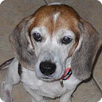 Adopt A Pet :: Marshall - Tampa, FL