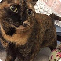 Adopt A Pet :: Tessa - Cincinnati, OH