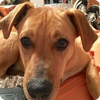 Adopt A Pet :: Nogales - Salt Lake City, UT