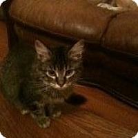 Adopt A Pet :: Abbey - Justin, TX