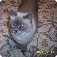 Adopt A Pet :: Jinny - Summerville, SC
