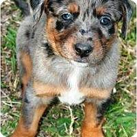 Adopt A Pet :: Flynn - Richmond, VA