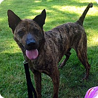 Adopt A Pet :: Kenmore-Courtesy Post - North Olmsted, OH