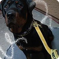 Adopt A Pet :: Goombah - Gilbert, AZ