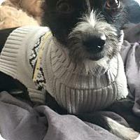 Adopt A Pet :: Isabelle