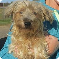 Adopt A Pet :: Arlo - Greenville, RI