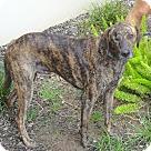 Adopt A Pet :: ZIGGY - Courtesy post