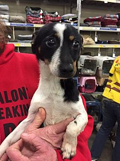 Terrier (Unknown Type, Medium) Dog for adoption in Fresno, California - Pistol