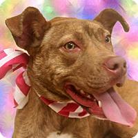 Adopt A Pet :: Shiva - Cincinnati, OH