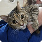 Adopt A Pet :: Joy* - Henderson, NC