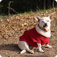 Adopt A Pet :: Lily - Creston, CA