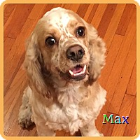 Adopt A Pet :: Max - Hollywood, FL
