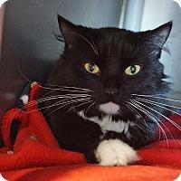 Adopt A Pet :: Stan 'Fire Survivor' - Mt Vernon, NY