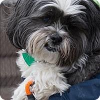Adopt A Pet :: Jake - Duluth, MN