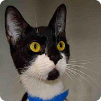 Adopt A Pet :: LUCKY - West Palm Beach, FL