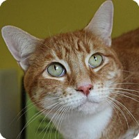 Adopt A Pet :: TOMMY - Red Bluff, CA