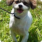 Adopt A Pet :: Shaggy(15 lb) Truly Perfect!
