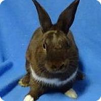 Adopt A Pet :: Klondike - Woburn, MA