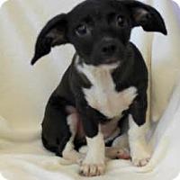Adopt A Pet :: Princess - Chester Springs, PA
